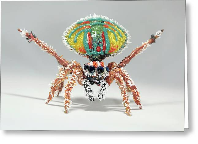 Peacock Spider Greeting Card by Tomasz Litwin