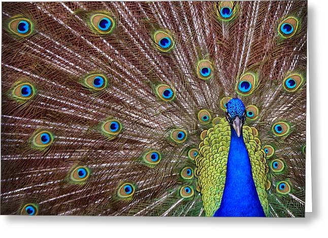 Greeting Card featuring the photograph Peacock Squared by Jaki Miller