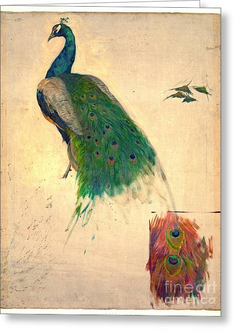 Peacock Study 1896 Greeting Card by Padre Art