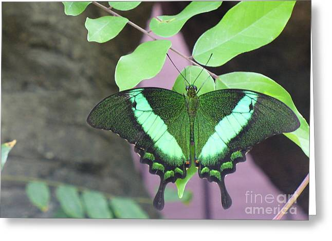 Greeting Card featuring the photograph Peacock Swallowtail by Lingfai Leung