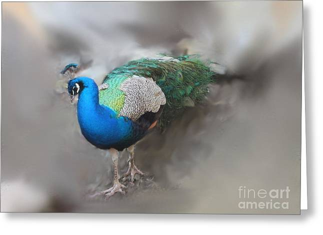 Peacock2 Greeting Card by Laurianna Taylor