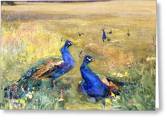 Peacocks In A Field Greeting Card by Mildred Anne Butler