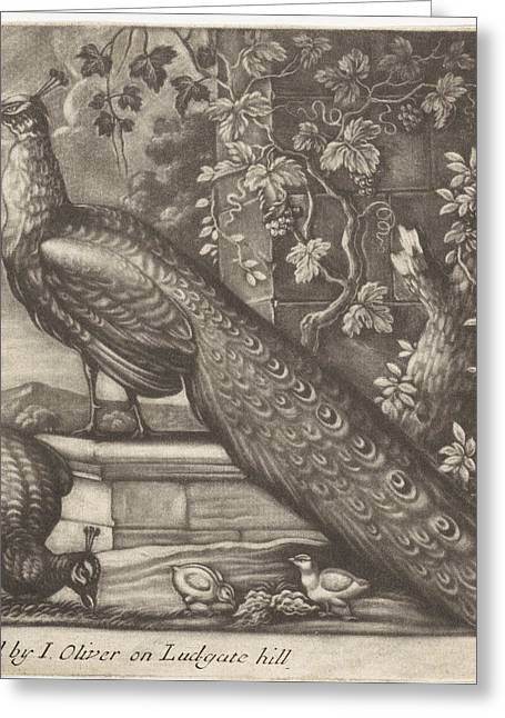 Peacocks, Jan Griffier I, John Oliver Greeting Card