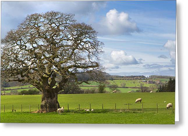 Peak District Tree Greeting Card
