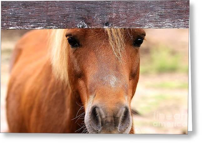 Peaking Pony Greeting Card