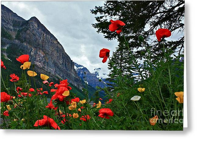 Greeting Card featuring the photograph Peaks And Poppies by Linda Bianic