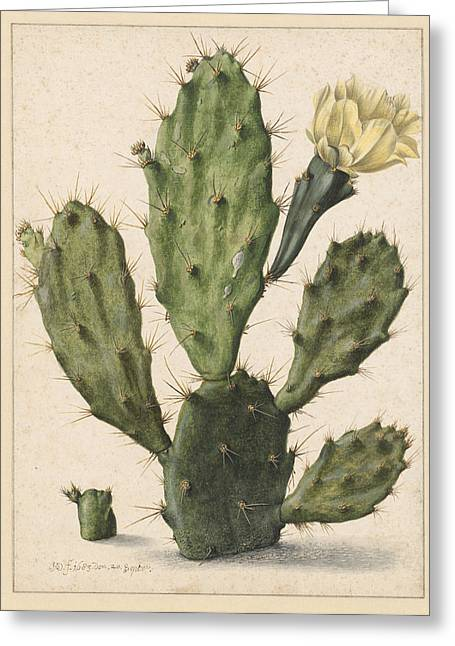 Pear Cactus In Bloom, Herman Saftleven Greeting Card by Quint Lox