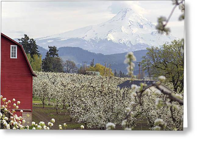 Pear Tree Orchard In Hood River Oregon Greeting Card