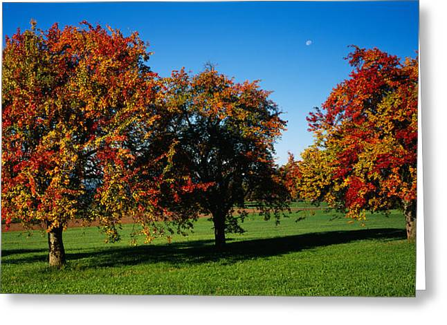 Pear Trees In A Field, Swiss Midlands Greeting Card by Panoramic Images