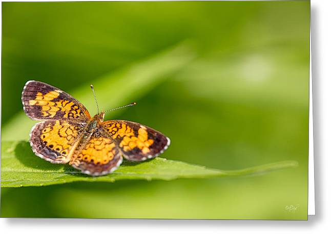 Pearl Crescent Notecard Greeting Card by Everet Regal