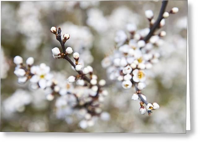 Pearls Of Blackthorn Greeting Card
