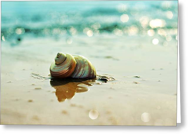 Pearly Shell Greeting Card