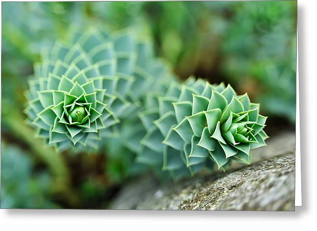 Pearly Succulents Greeting Card