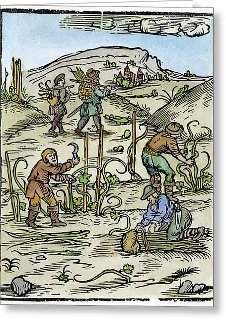 Peasants, 15th Century Greeting Card