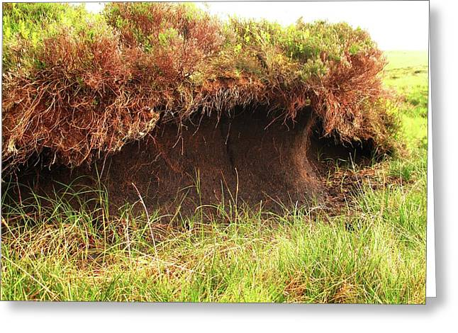 Peat Bog Greeting Card
