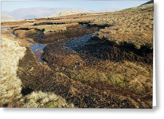 Peat Deposits Greeting Card