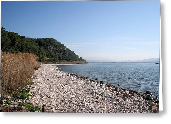Greeting Card featuring the photograph Pebbled Beach by Tracey Harrington-Simpson
