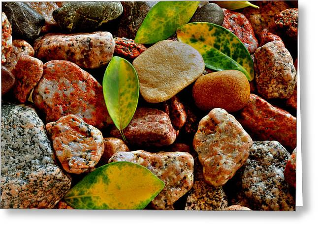 Greeting Card featuring the photograph Pebbles And Leaves by Marwan Khoury