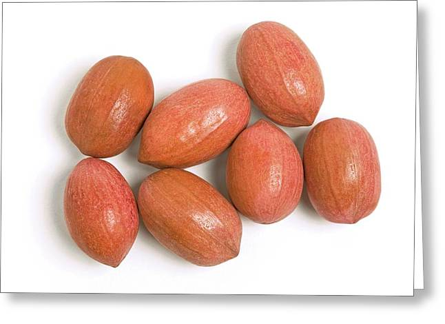 Pecan Nuts Greeting Card by Ann Pickford