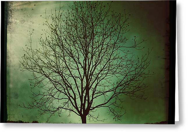 Pecan Tree Greeting Card by Sarah Coppola