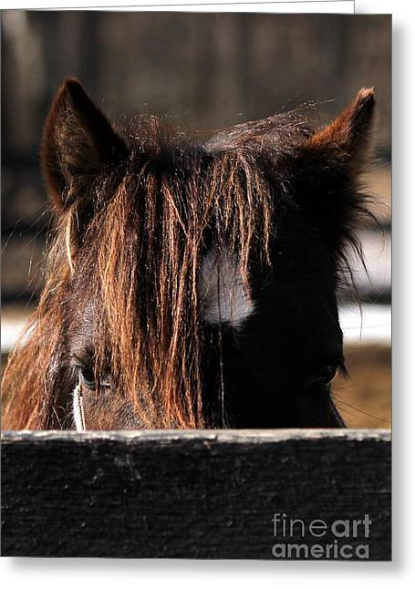 Peek-a-boo Pony Greeting Card
