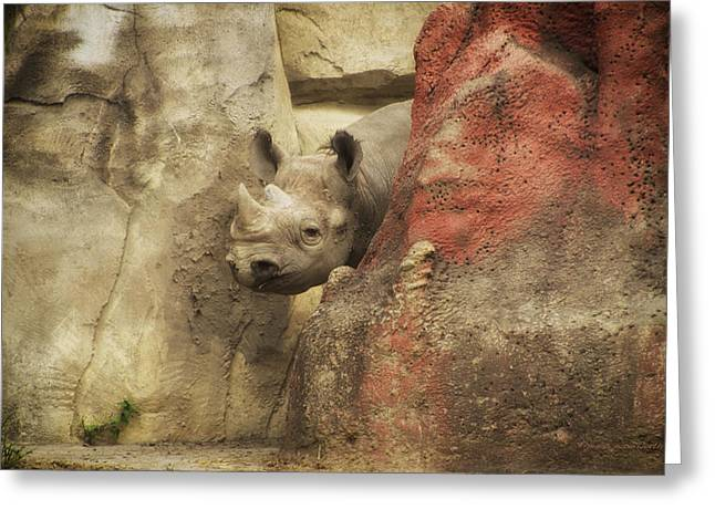 Peek A Boo Rhino Greeting Card