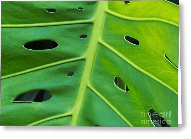 Peekaboo Leaf Greeting Card by Ann Horn