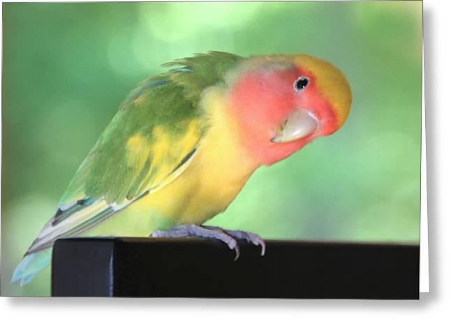 Peeking Peach Face Lovebird Greeting Card by Andrea Lazar