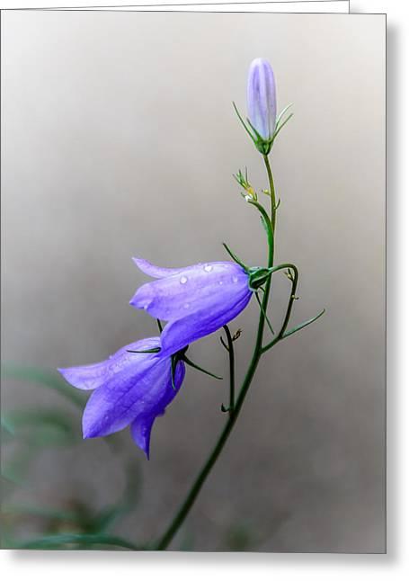 Blue Bells Peeking Through The Mist Greeting Card