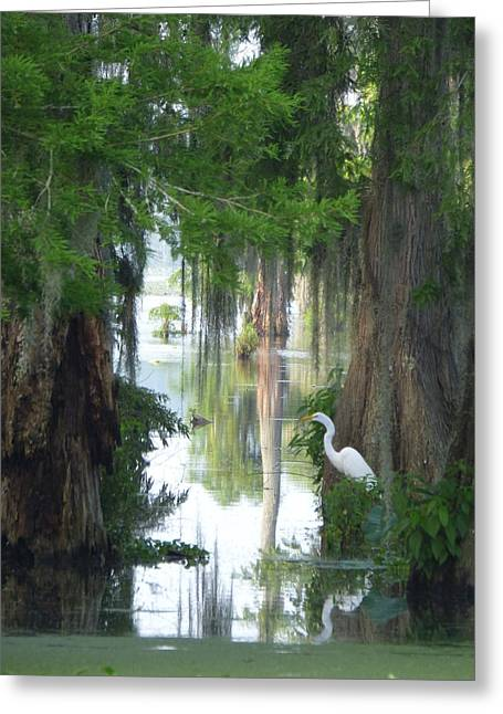 Peeking Thru Natures Swamp Window Greeting Card