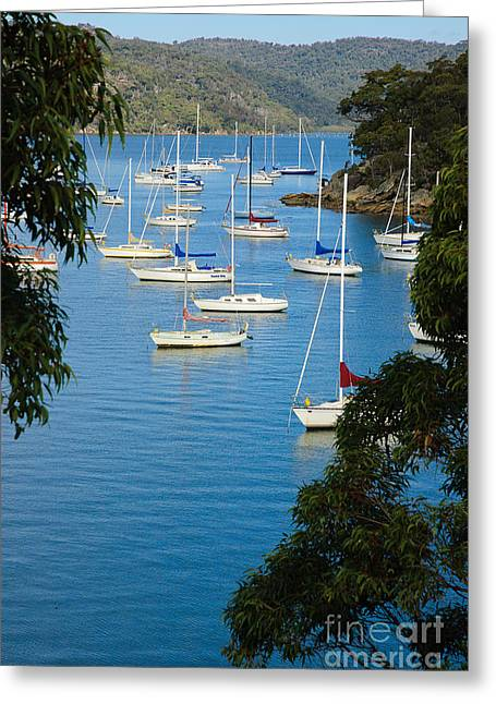 Peeping Through The Trees - Yachts Moored In A Quiet River Greeting Card