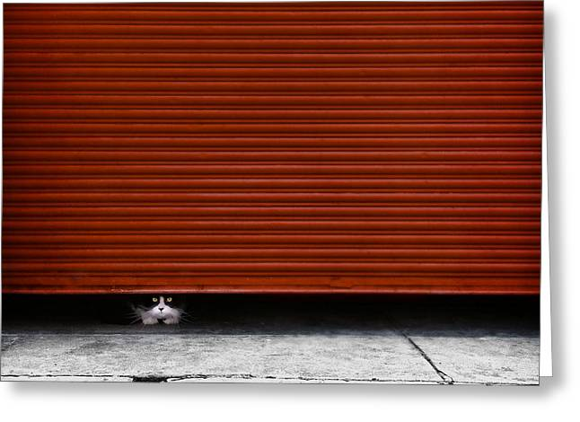 Peeping Tom Greeting Card by Wolf Shadow  Photography