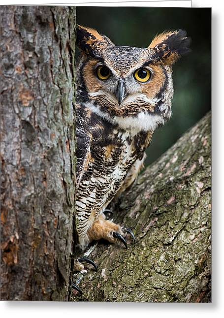 Peering Out Greeting Card by Dale Kincaid