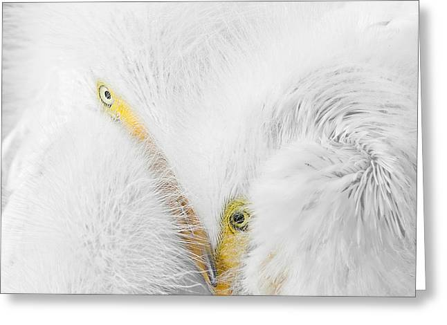 Peering Thru Feathers Greeting Card