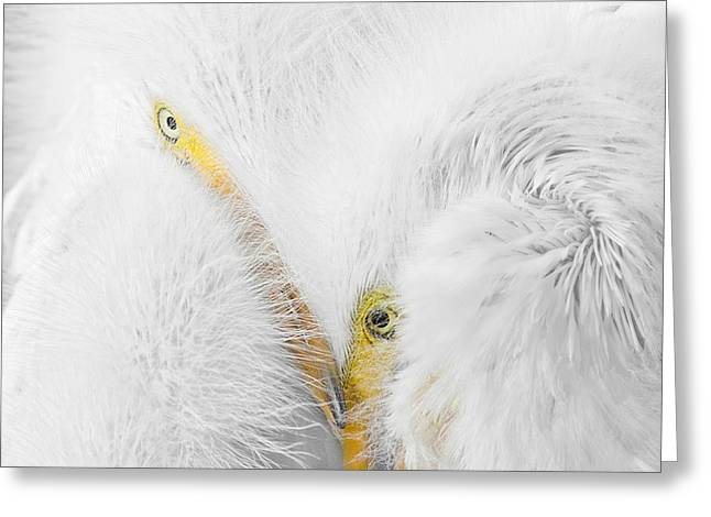 Peering Thru Feathers Greeting Card by Dawn Currie