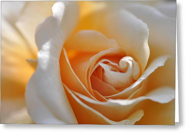Pegasus Rose  Greeting Card by Sabine Edrissi