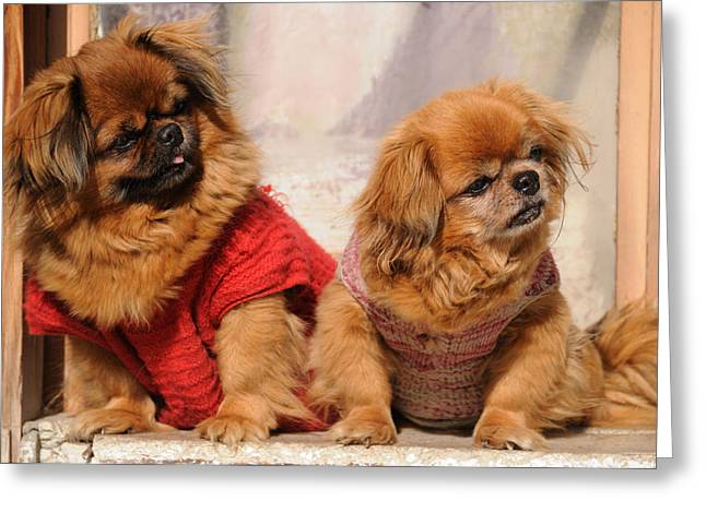 Pekingese Pair Greeting Card by Jeremy Voisey