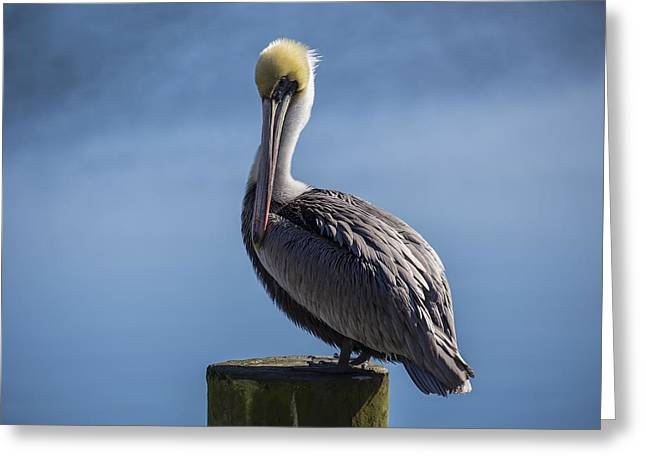 Pelican 02 Greeting Card