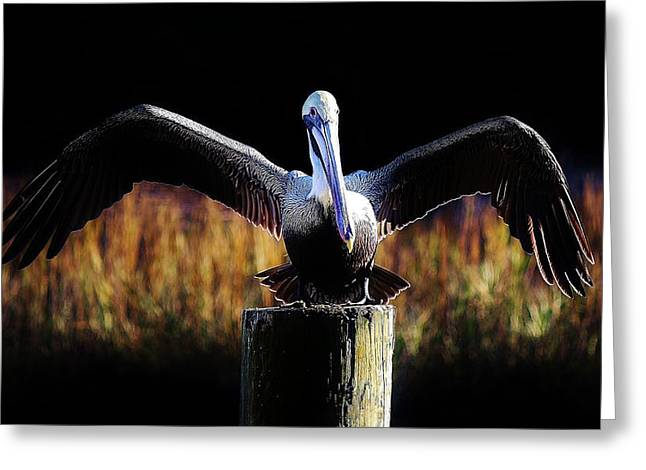Pelican All Aglow Greeting Card by Paulette Thomas