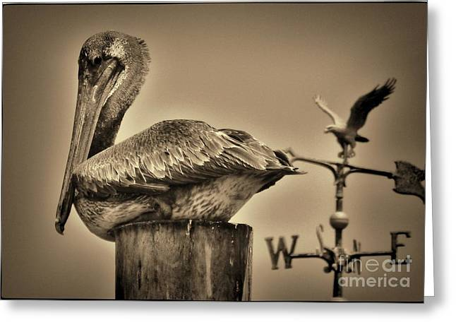Pelican And The Weathervane Greeting Card by Pamela Blizzard