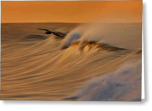 Greeting Card featuring the photograph Pelican And Wave  Mg_6950 by David Orias