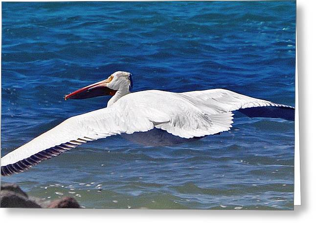 Pelican At Pyramid Lake Greeting Card