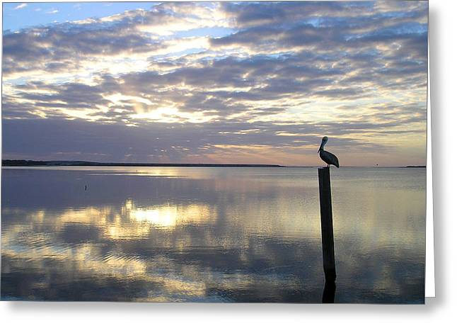 Pelican At Sunset Greeting Card