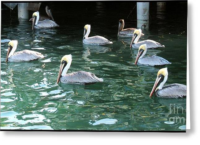 Pelican Ballet Greeting Card by Claudette Bujold-Poirier