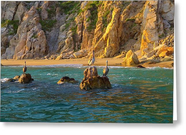 Pelican, Cabo San Lucas, Baja, Mexico Greeting Card by Douglas Peebles