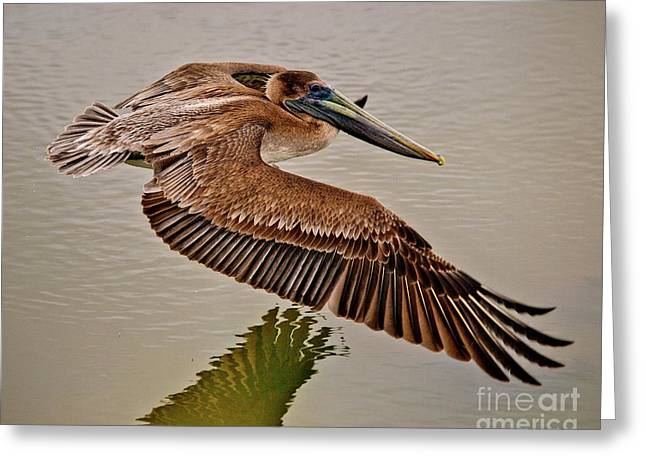 Pelican Cruise Greeting Card