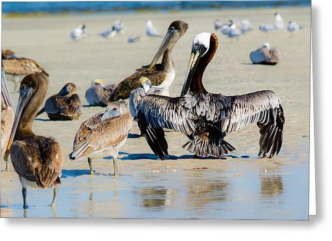 Pelican Drying Greeting Card
