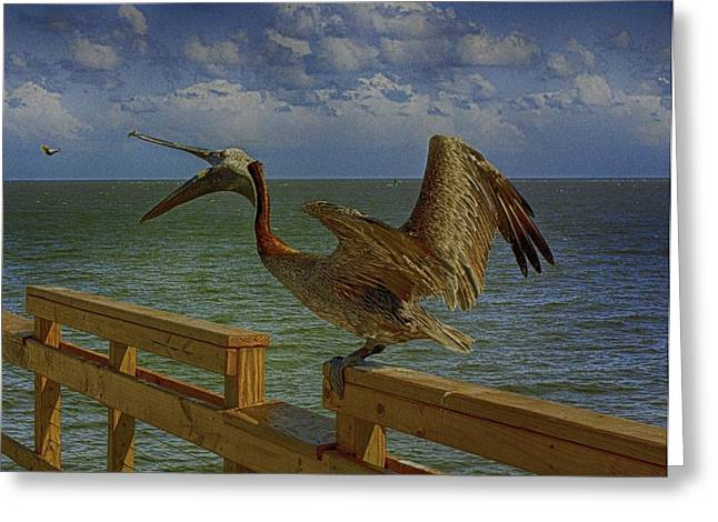 Pelican Eating Greeting Card by J Riley Johnson