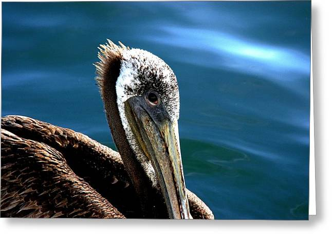 Pelican Eyes Greeting Card