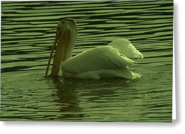 Pelican Fishing Greeting Card by Jeff Swan